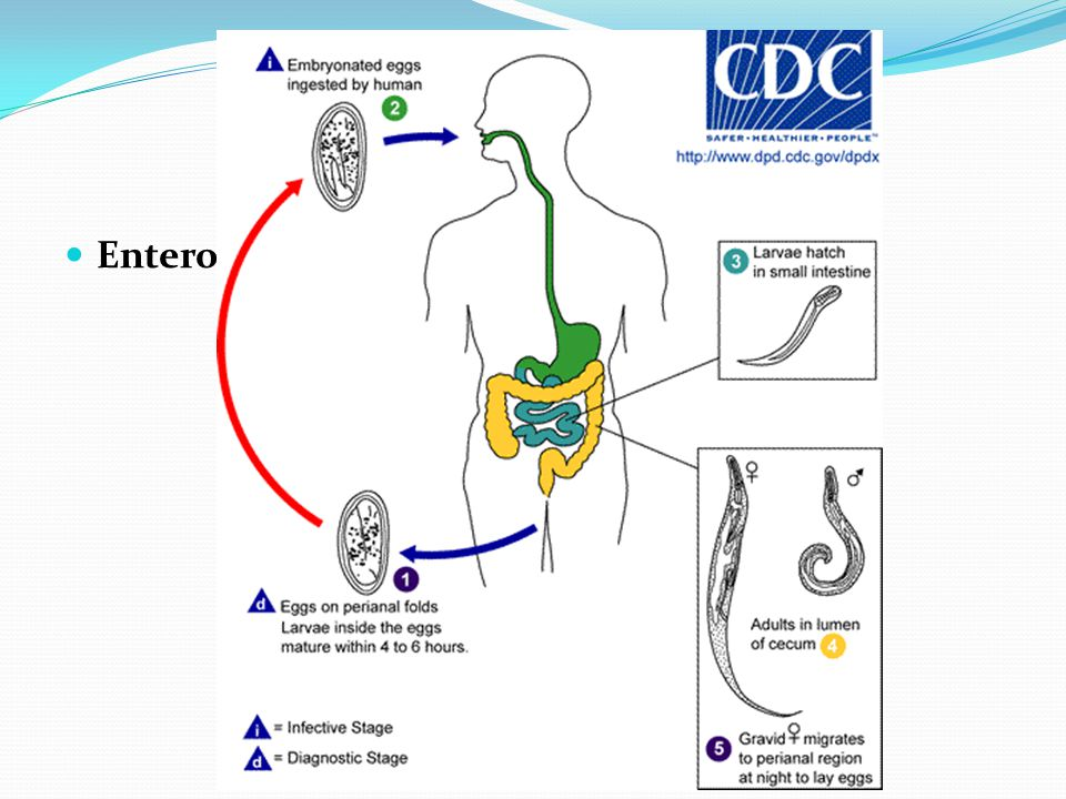 Drug Use In Gastrointestinal Diseases Ppt Download