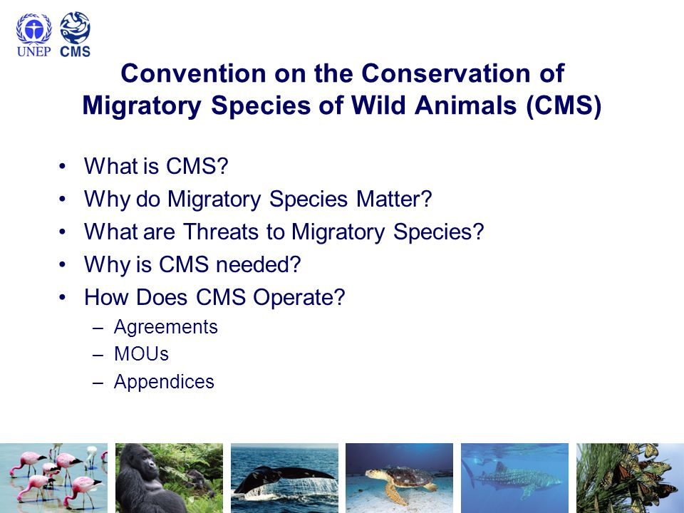 Convention on the Conservation of Migratory Species of Wild Animals (CMS)