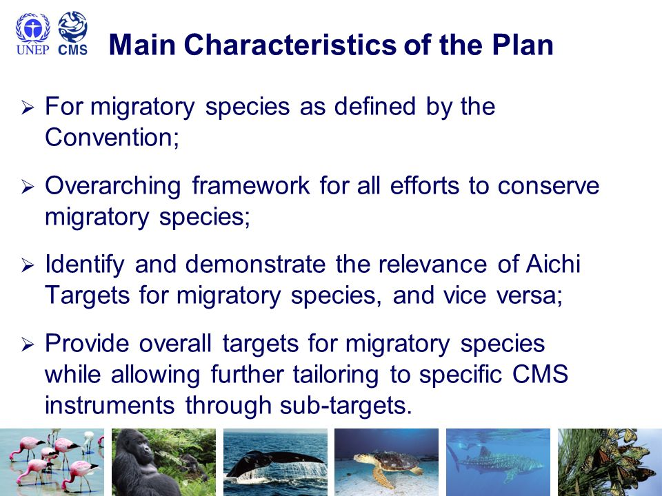 Main Characteristics of the Plan