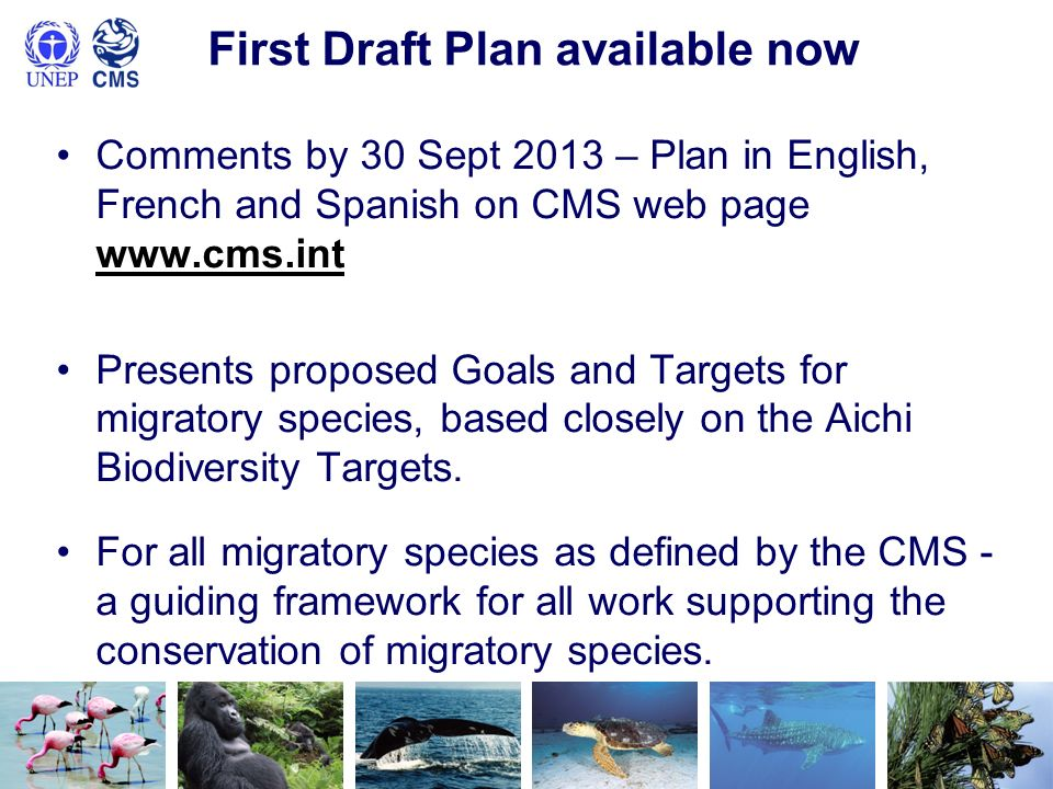 First Draft Plan available now