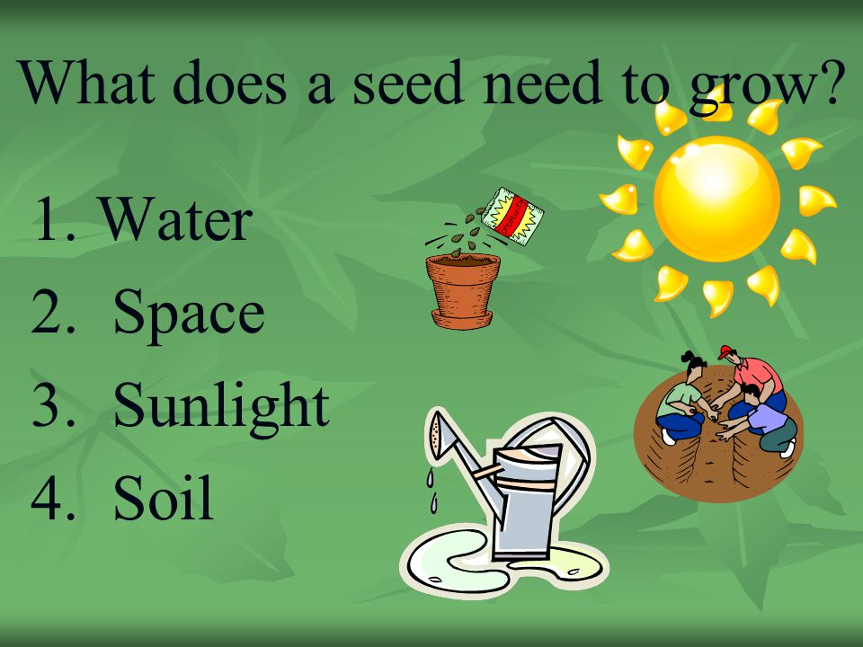 How plants grow how seeds travel ppt download for What does soil contain