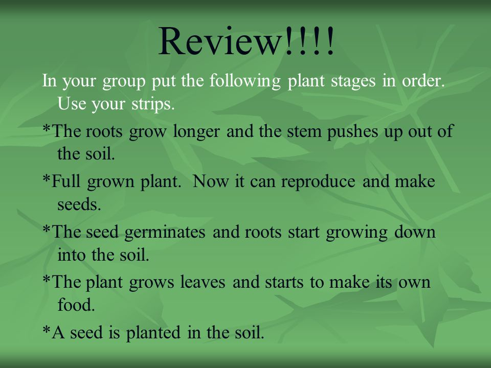 How plants grow how seeds travel ppt download for Full form of soil