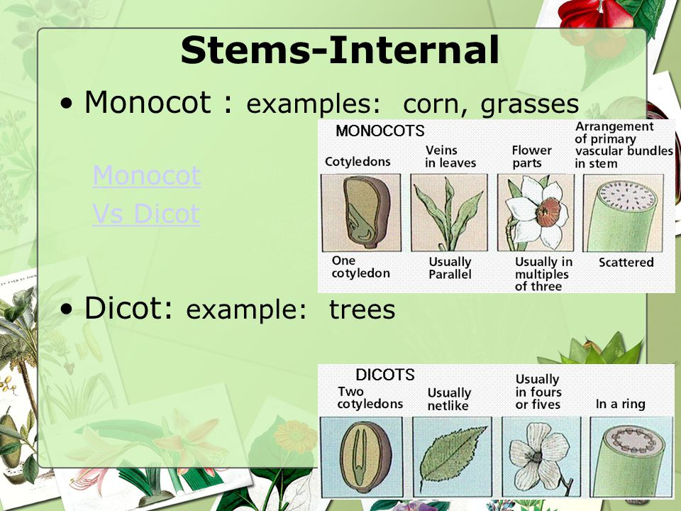 Plant Life Cycle 401 Explain The Growth Process Of Plants Ppt