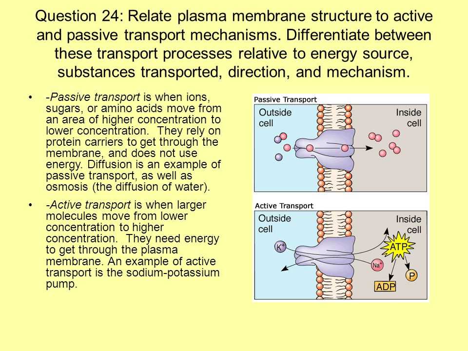 questions on cell membrane transport mechanisms Physiology quiz - general principles of membrane transport - part 1.