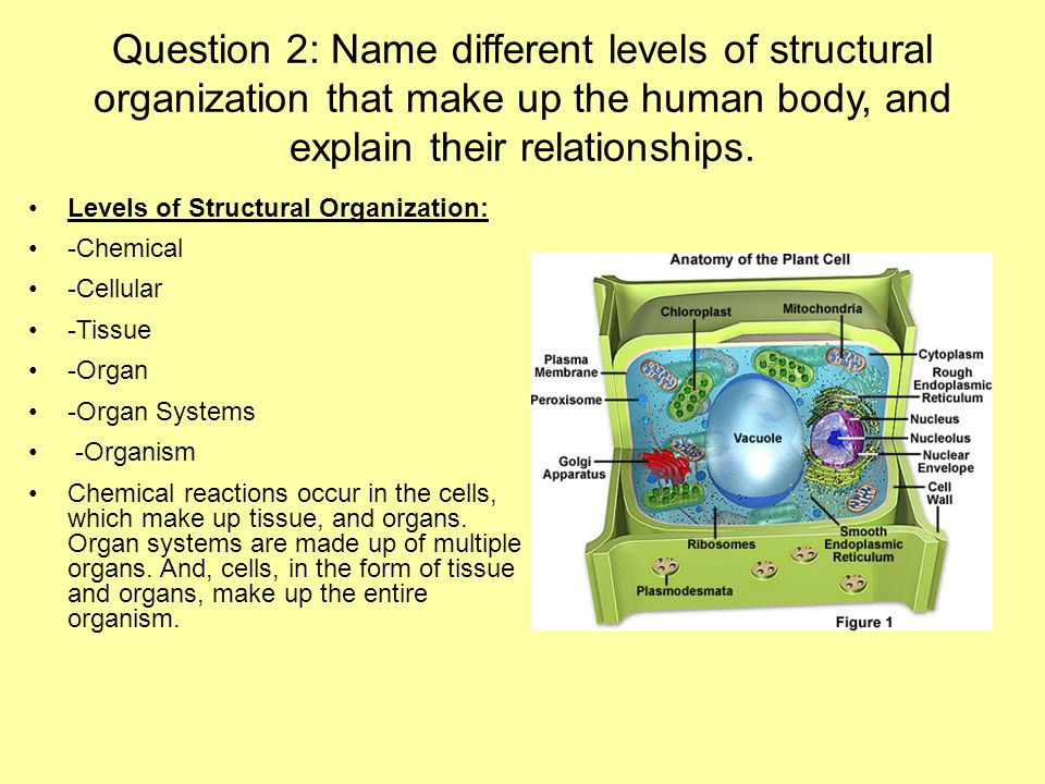 physiology of two named body systems essay P4) explain the physiology of two names body systems in relation to energy metabolism in the body production of energy our body requires energy so the body functions.