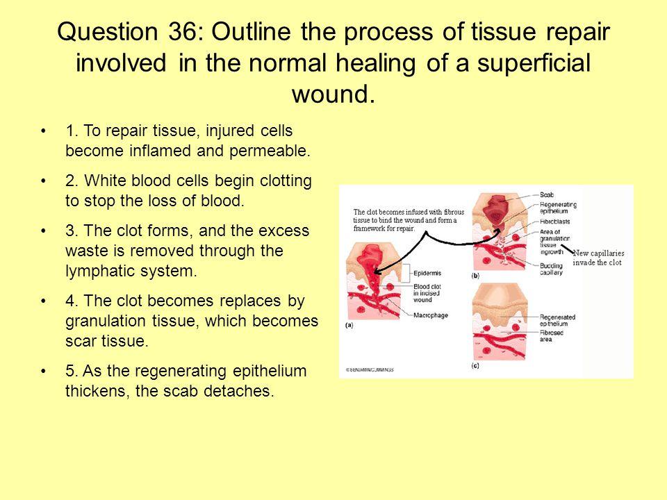 tissue repair process