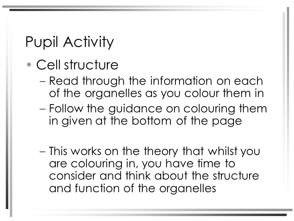 Pupil Activity Cell structure