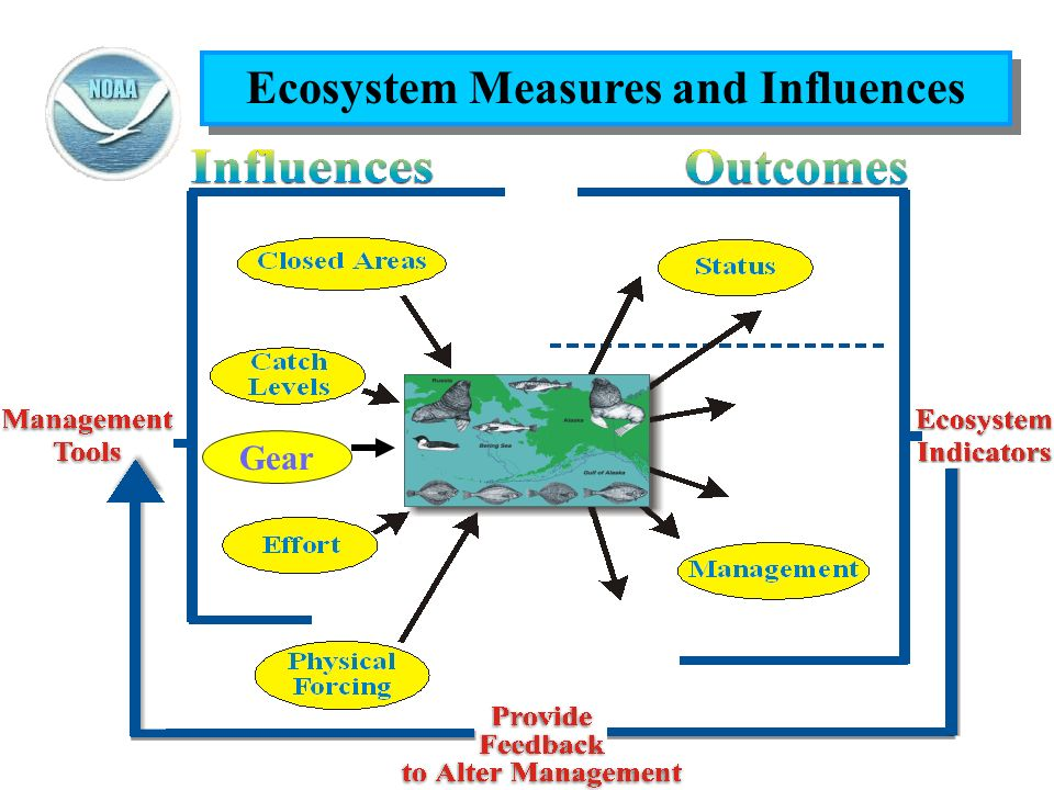 Ecosystem Measures and Influences