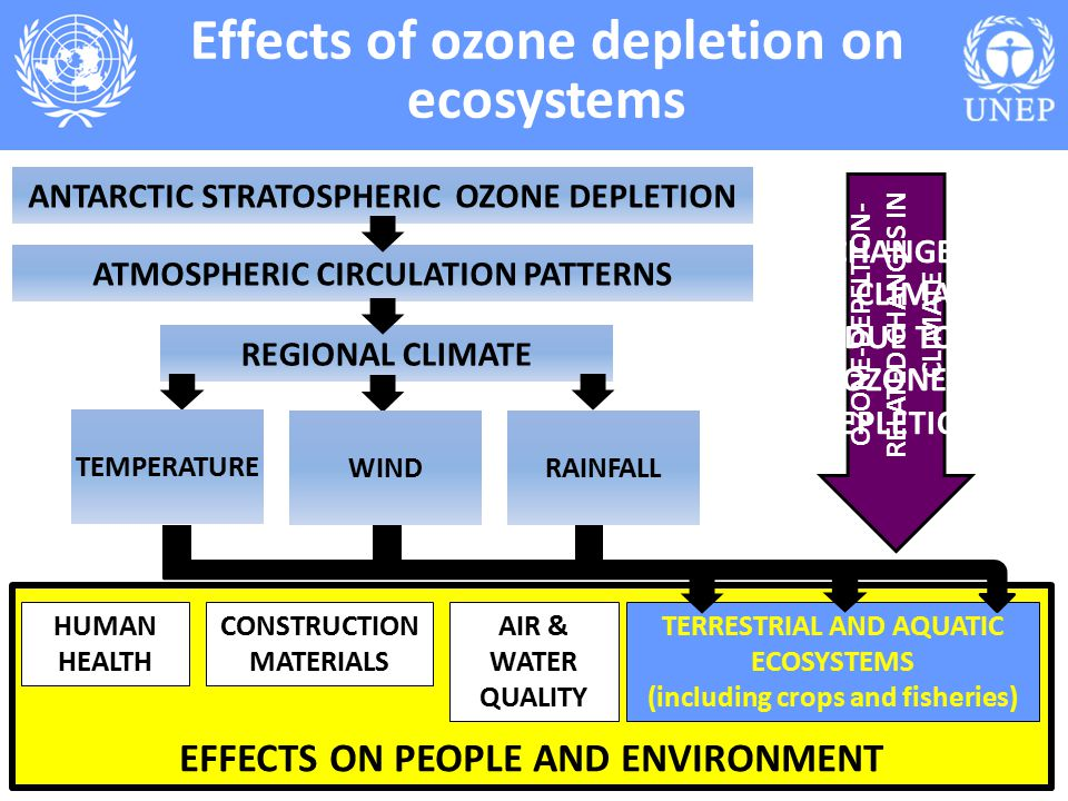 Report of the Environmental Effects - ppt video online ...