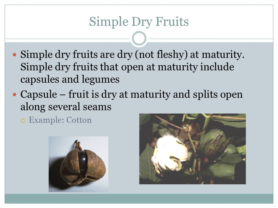Simple Dry Fruits Simple dry fruits are dry (not fleshy) at maturity. Simple dry fruits that open at maturity include capsules and legumes.