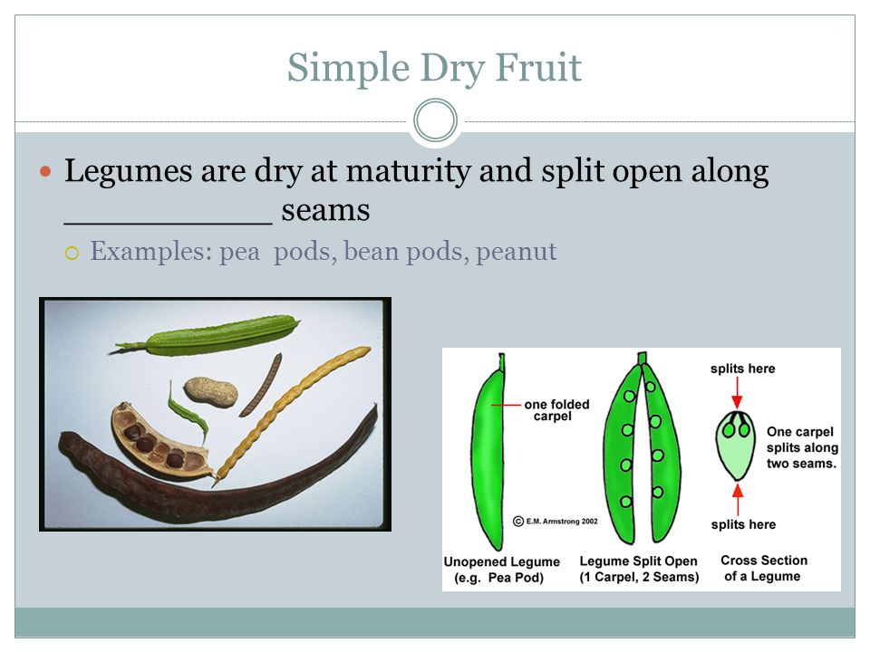 Simple Dry Fruit Legumes are dry at maturity and split open along __________ seams.