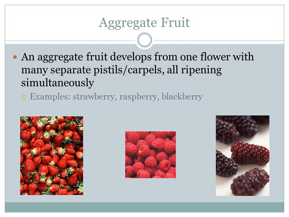 Aggregate Fruit An aggregate fruit develops from one flower with many separate pistils/carpels, all ripening simultaneously.