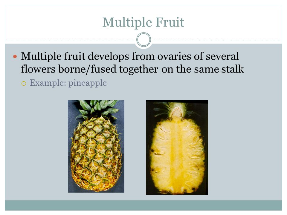 Multiple Fruit Multiple fruit develops from ovaries of several flowers borne/fused together on the same stalk.