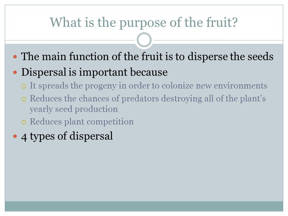 What is the purpose of the fruit