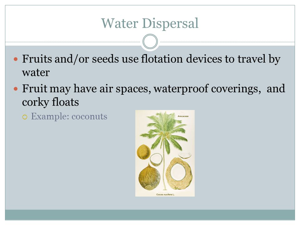 Water Dispersal Fruits and/or seeds use flotation devices to travel by water. Fruit may have air spaces, waterproof coverings, and corky floats.
