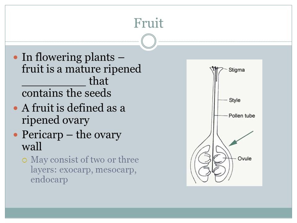 Fruit In flowering plants – fruit is a mature ripened _________ that contains the seeds. A fruit is defined as a ripened ovary.