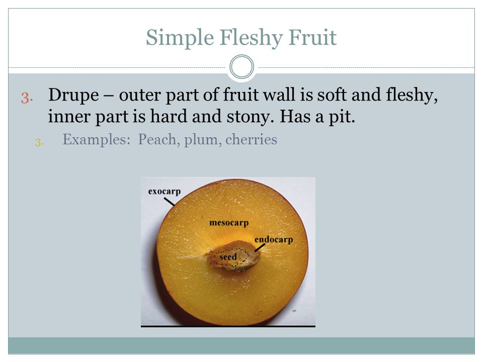 Simple Fleshy Fruit Drupe – outer part of fruit wall is soft and fleshy, inner part is hard and stony. Has a pit.