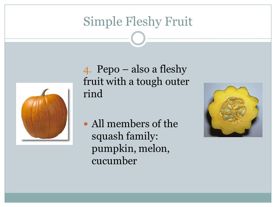 Simple Fleshy Fruit 4. Pepo – also a fleshy fruit with a tough outer rind.