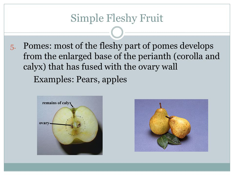 Simple Fleshy Fruit