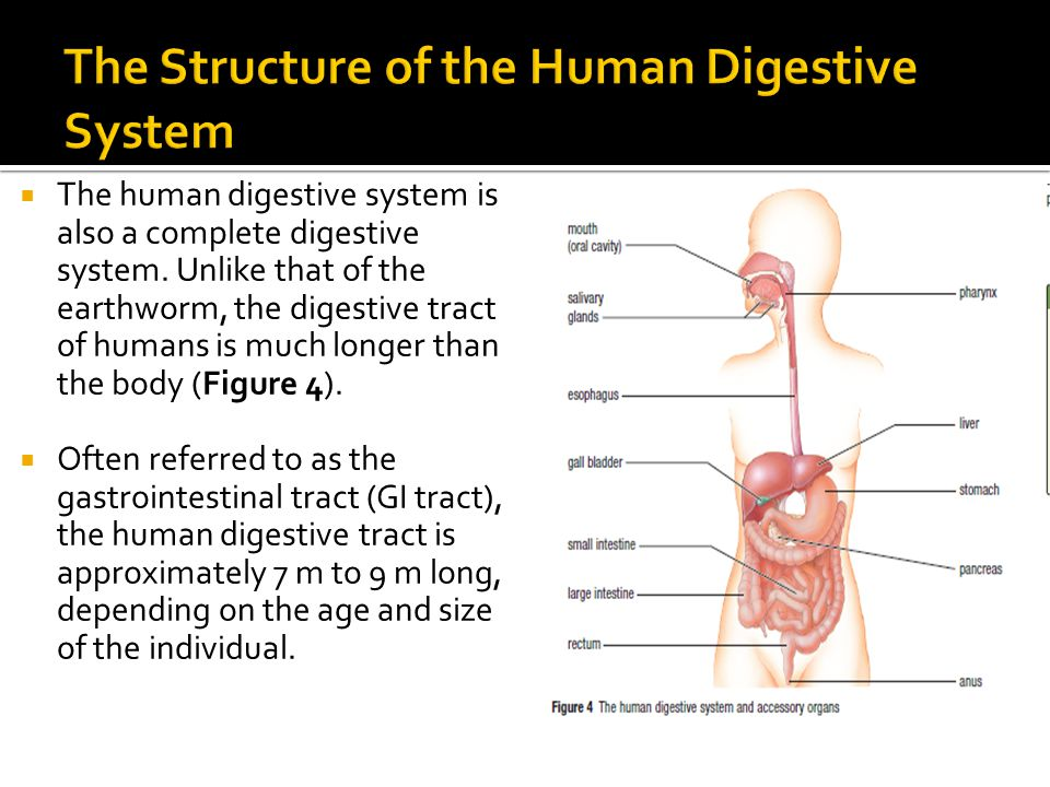 an overview of the digestive system and its functions If the history and epidemiologic and clinical findings are consistent with gi disease, the lesion should be localized within the system, and the type of lesion and its cause determined the abnormality may sometimes be localized to the large or small intestine by history, physical examination, and fecal characteristics (see table: differentiation.