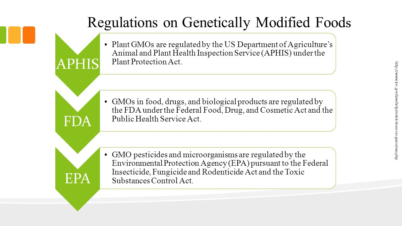 genetically modified organism 10 essay Genetically modified organisms - gmos 5 pages 1353 words june 2015 saved essays save your essays here so you can locate them quickly.