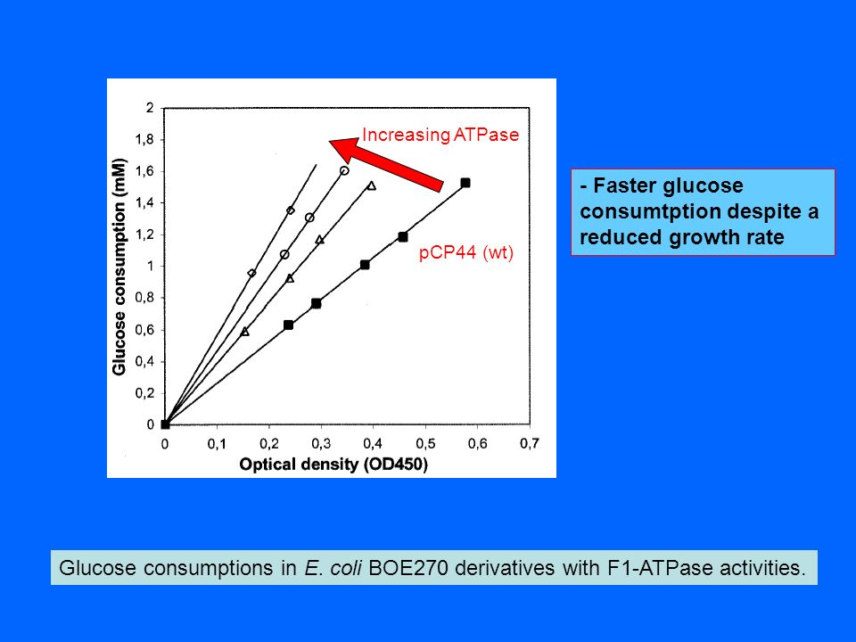 - Faster glucose consumtption despite a reduced growth rate