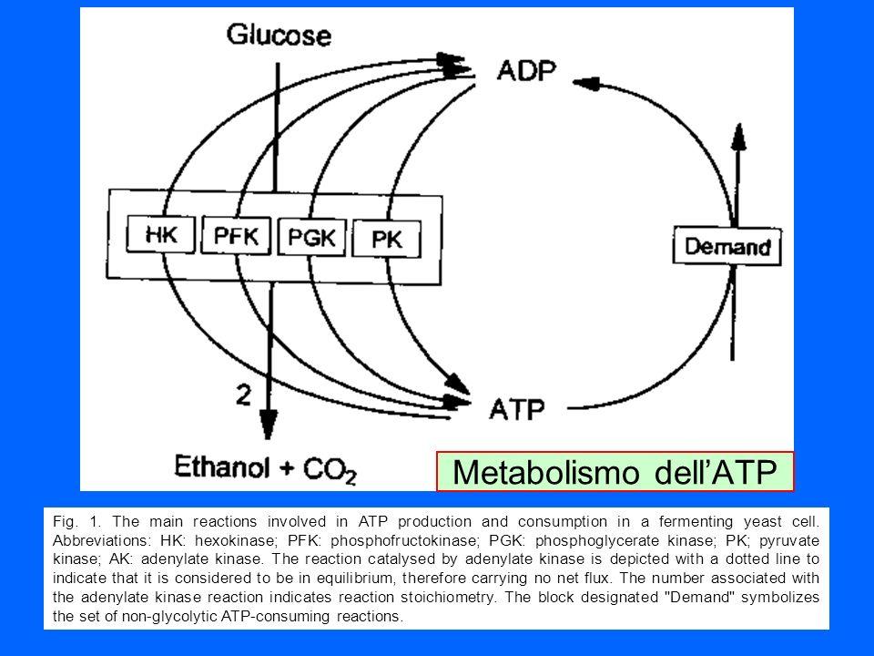 Metabolismo dell'ATP
