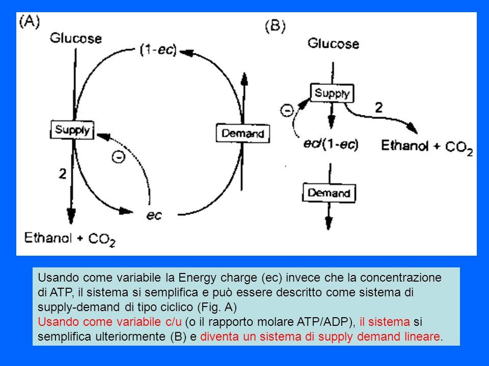 Usando come variabile la Energy charge (ec) invece che la concentrazione di ATP, il sistema si semplifica e può essere descritto come sistema di supply-demand di tipo ciclico (Fig. A)