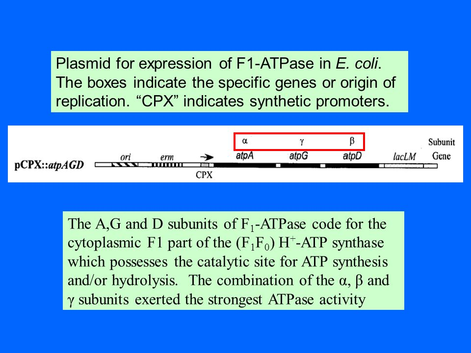 Plasmid for expression of F1-ATPase in E. coli