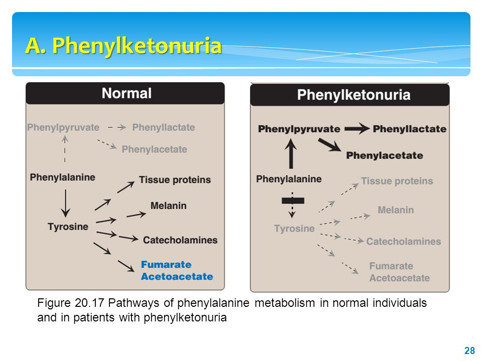 characteristics of phenylketonuria Correlations between maternal characteristics and offspring characteristics in maternal phenylketonuria in our study the frequency of hyperphenylalaninemia.