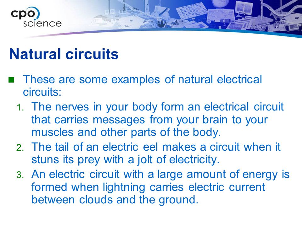 Natural circuits These are some examples of natural electrical circuits: