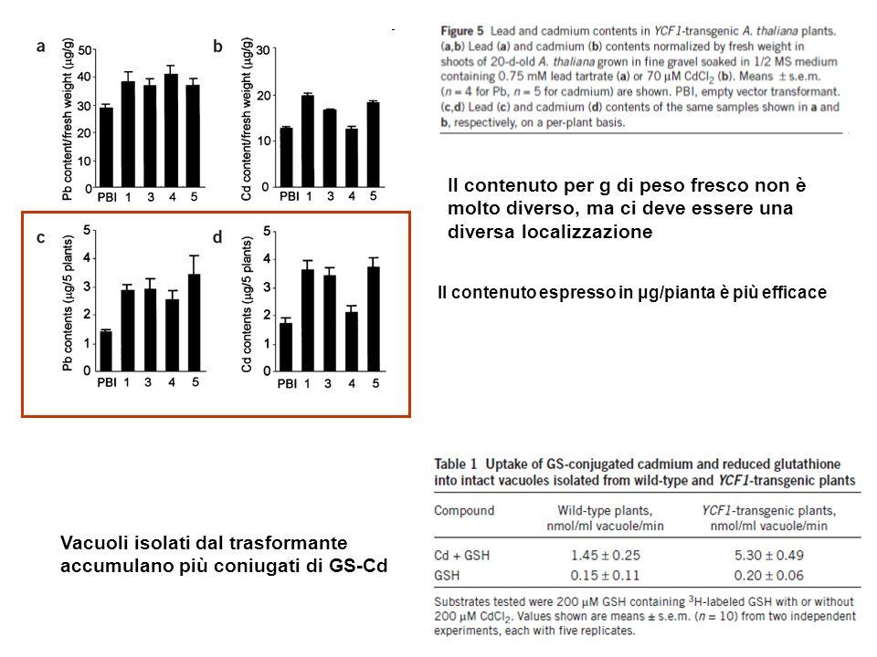 Il contenuto espresso in μg/pianta è più efficace