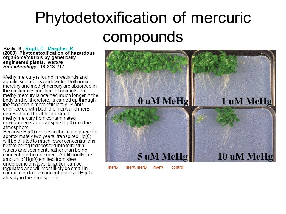 Phytodetoxification of mercuric compounds