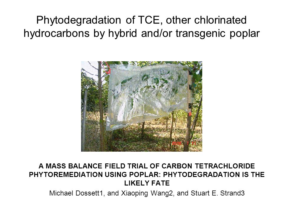 Michael Dossett1, and Xiaoping Wang2, and Stuart E. Strand3