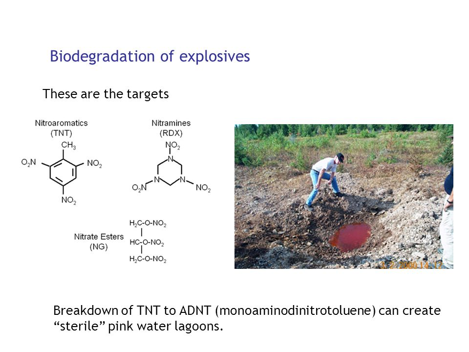 Biodegradation of explosives