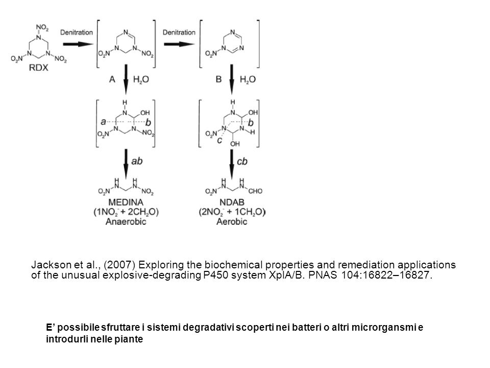 Jackson et al., (2007) Exploring the biochemical properties and remediation applications of the unusual explosive-degrading P450 system XplA/B. PNAS 104:16822–16827.