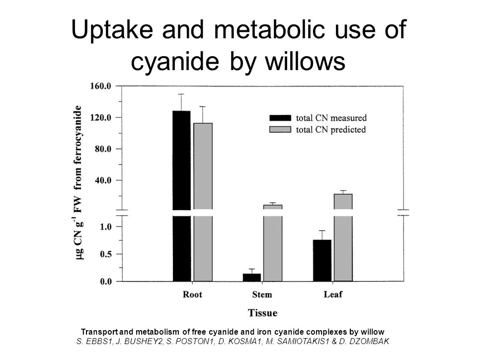Uptake and metabolic use of cyanide by willows