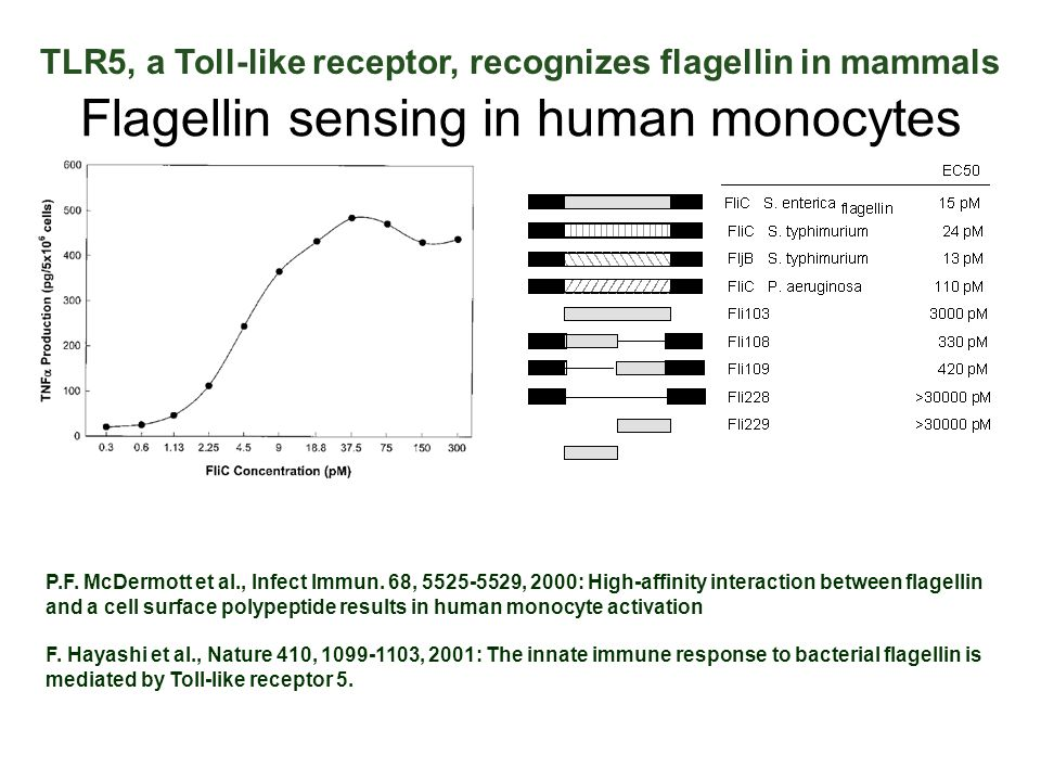 Flagellin sensing in human monocytes