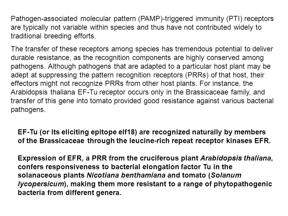 Pathogen-associated molecular pattern (PAMP)-triggered immunity (PTI) receptors are typically not variable within species and thus have not contributed widely to traditional breeding efforts.