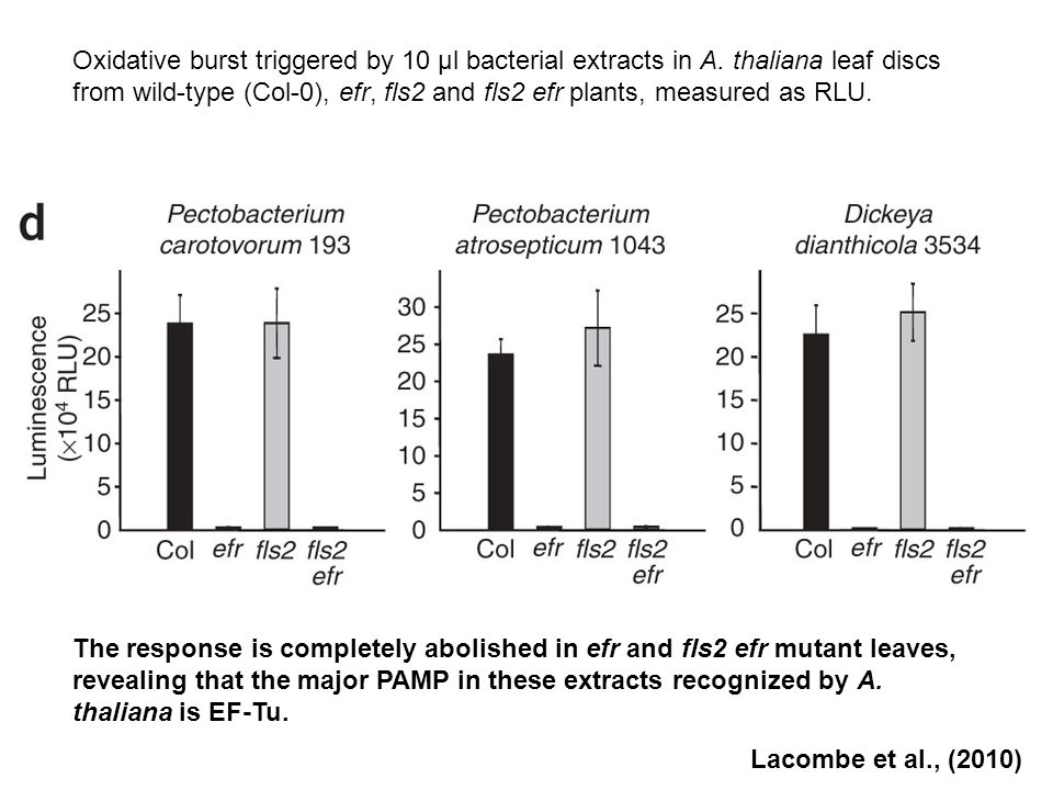 Oxidative burst triggered by 10 μl bacterial extracts in A