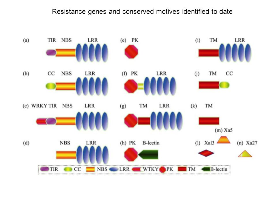 Resistance genes and conserved motives identified to date