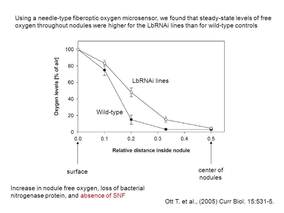 Using a needle-type fiberoptic oxygen microsensor, we found that steady-state levels of free oxygen throughout nodules were higher for the LbRNAi lines than for wild-type controls