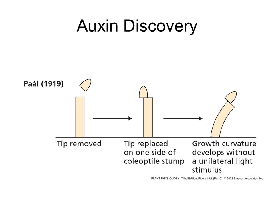 Auxin Discovery