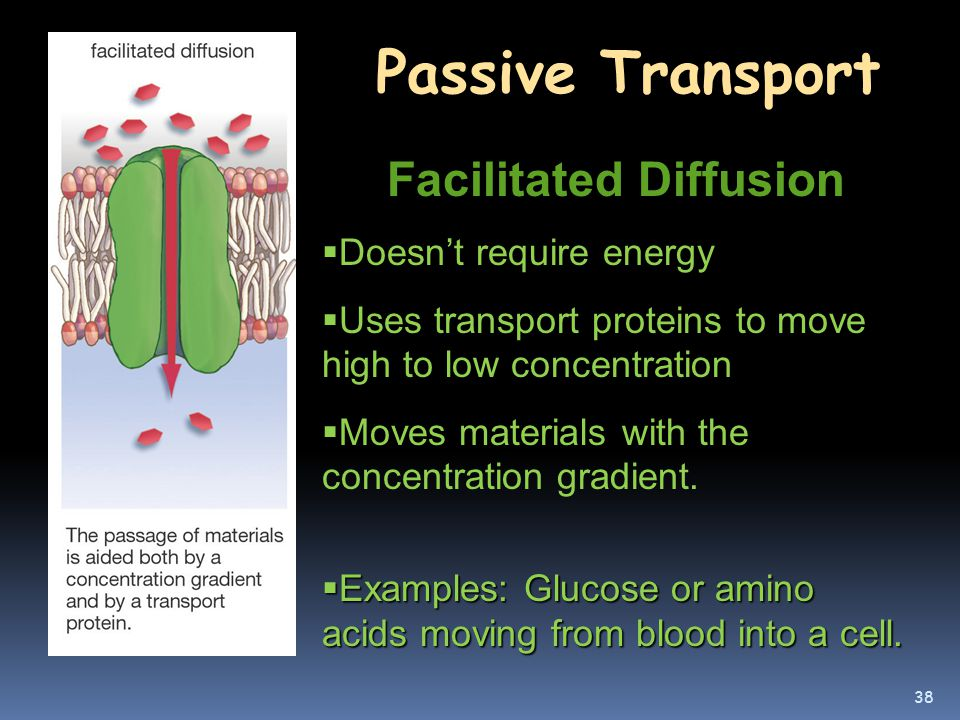 Cell Membrane: Structure and Function - ppt download