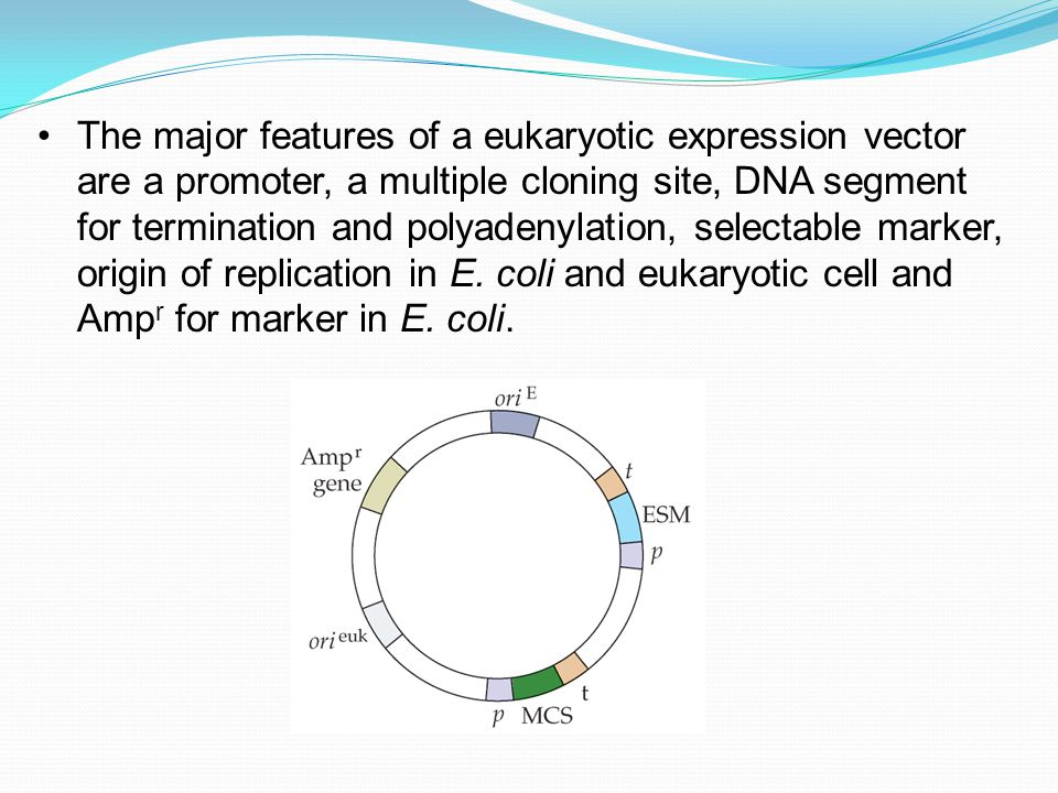 eukaryotic vectors for expression of proteins The market for eukaryotic expression systems can include expression vectors, reagents and competent cells that are used for transfection the market for eukaryotic expression systems is witnessing high growth rate during the forecast period 2014 to 2020 owing to rising number of complex diseases such as cardiovascular diseases and cancer.