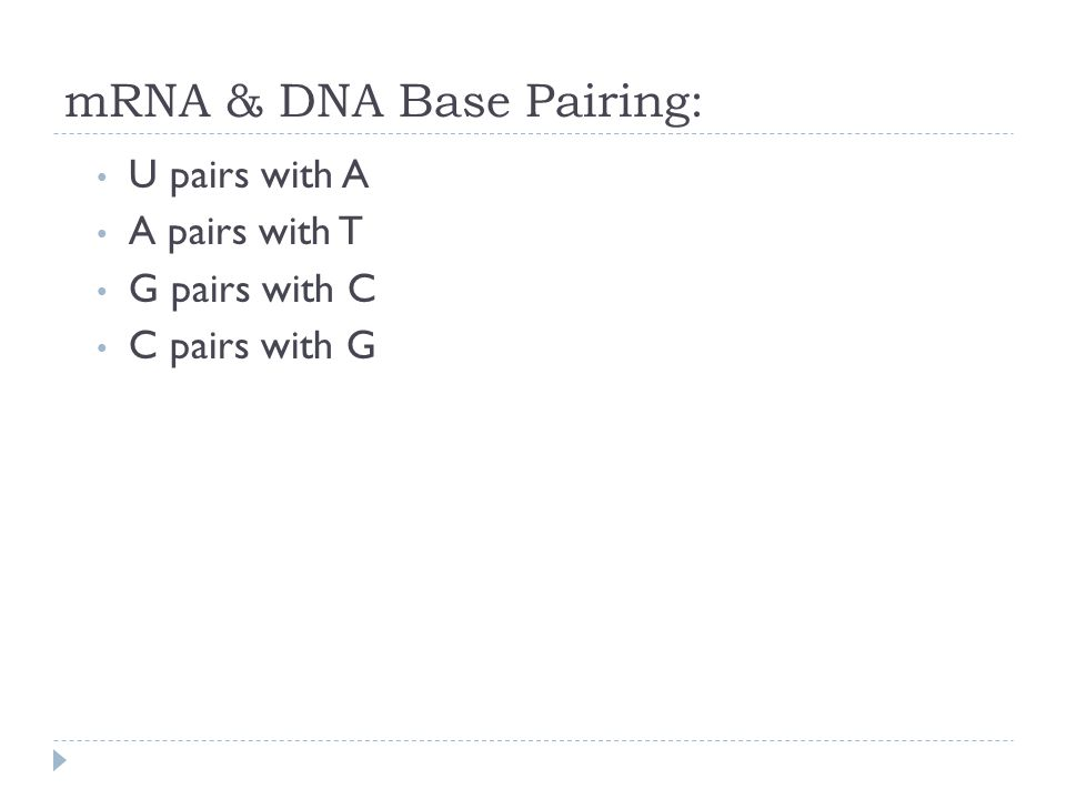 mRNA & DNA Base Pairing: