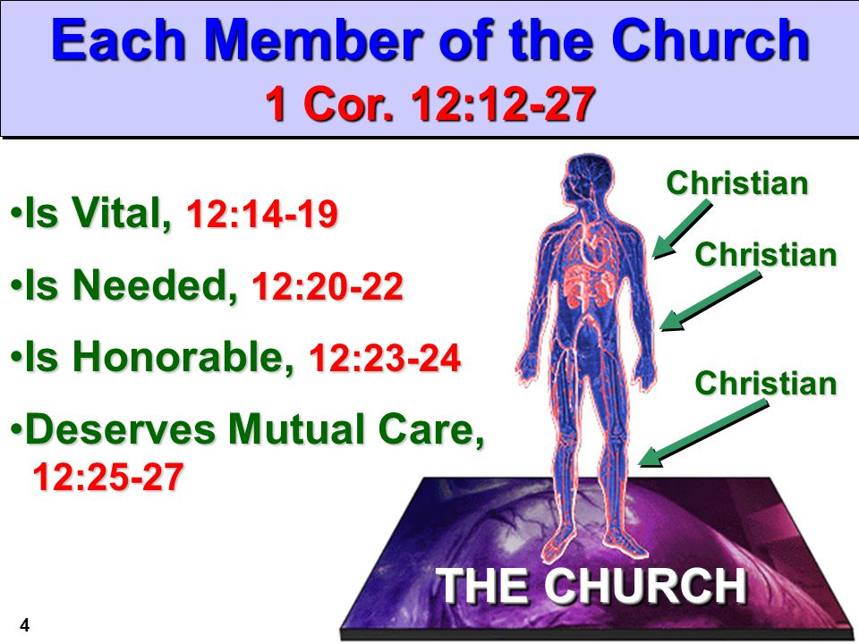 This Christmas Love 1 Corinthians 12 31: The Church: Many Members, One Body