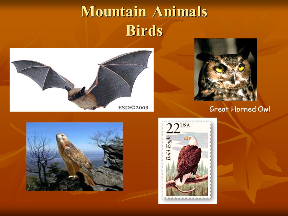 Mountain Animals Birds