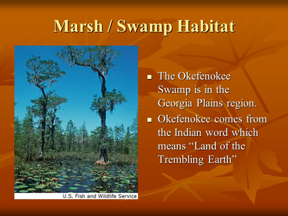 Marsh / Swamp Habitat The Okefenokee Swamp is in the Georgia Plains region.