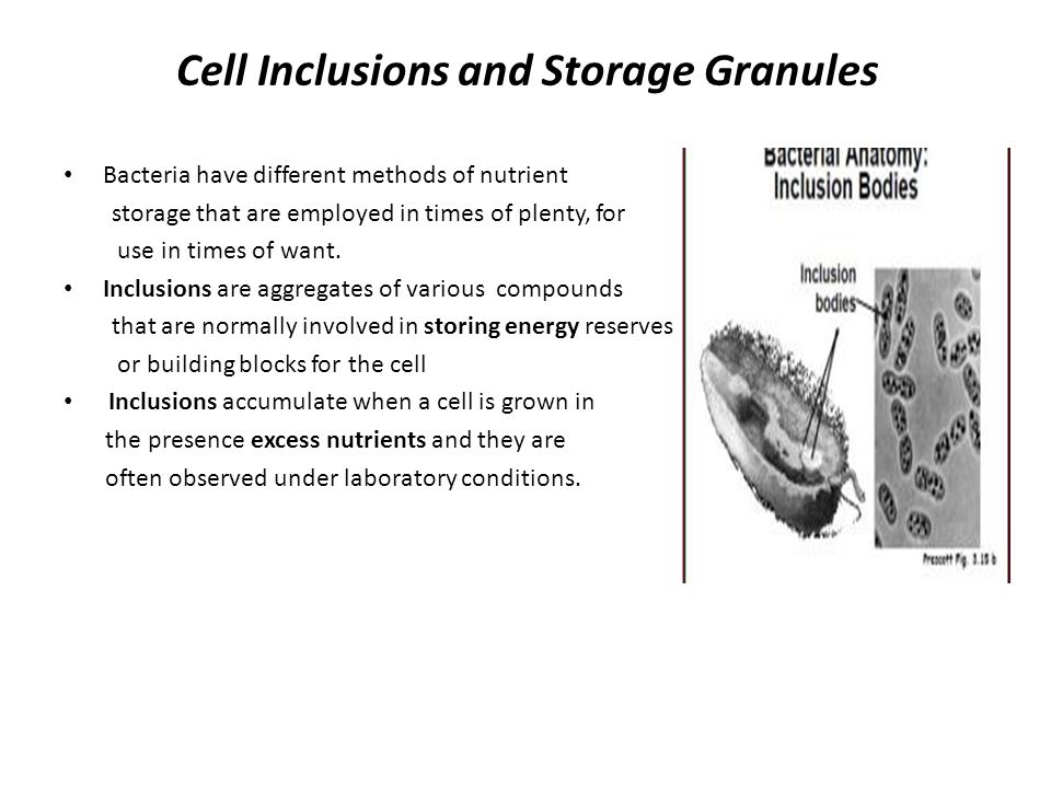 Bacterial Morphology And Structure Ppt Video Online Download